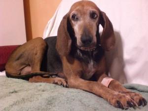 Lea, morta in seguito a un intervento molto discusso