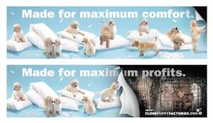 """Una campagna USA contro le """"puppy mills"""", fabbriche di cuccioli"""
