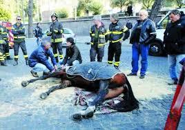 Incidente mortale per un cavallo delle botticelle romane, servizio di cui si chiede a gran voce la dismissione dal 2008