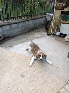 Ash, 4 mesi, sparito la mattina di martedì 29 luglio, portato via da un furgone bianco vicino Tivoli