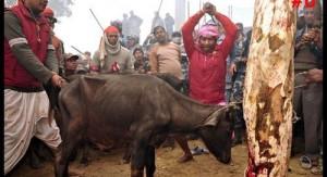 Il massacro votivo di Gadhimai avviene in preda a eccitazione e alcol