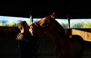Uno degli ultimi cavalli sequestrati a Colleferro: cerca casa con la sua famiglia equina
