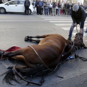 Cavallo delle botticelle a terra, uno degli incidenti più recenti
