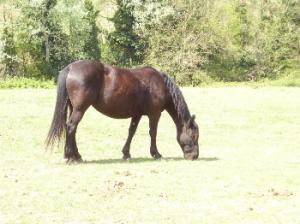 In ottima salute Quercia vive dal 2010 con altri cavalli sieropositivi all'Aie presso il centro IHP. Viene dalla provincia di Perugia, la Asl premeva affinché la sua padrona la facesse abbattere