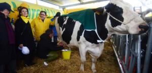 Una sventurata mucca munta a Venezia dal governatore Zaia davanti a una garrula Alessandra Moretti fra vento e gelo