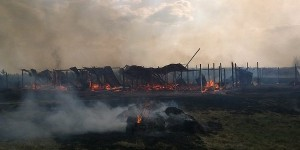Un rogo doloso ha distrutto il canile Rifugo Italia a Kiev uccidendo 76 cani