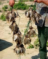 L'allodola è un uccellino molto amato in Romania, una nuova legge che spalanca le porte ai cacciatori italiani e libanesi potrebbe determinarne il massacro