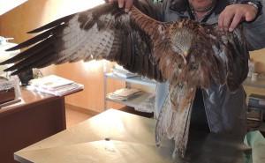 Oltre a deturpare il territorio le pale eoliche possono essere letali per l'avifauna