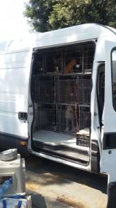"""""""Condizioni di trasporto pessime"""" dichiara il Cfs. La staffetta era organizzata da una discussa professionista degli spostamenti di cani e gatti"""