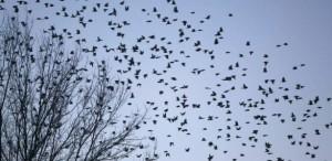 La crudele pratica dei richiami vivi imbocca il viale del tramonto: vietate le catture di uccellini selvatici con i mezzi proibiti dall'UE