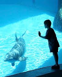 Una gabbia di vetro non sostituisce l'oceano e il giro d'affari di acquari e delfinari non giustifica cattura, prigionia e sofferenza di pesci, cetacei, foche e altre creature marine