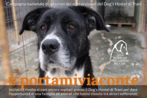 Lndc ha lanciato una campagna specifica per trovare casa ai sopravvissuti del Dog's Hostel, canile lager di Trani, ma la Procura ne vuole spostare molti in Basilicata, contravvenendo alla stessa Legge regionale dell Puglia