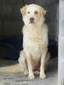 Sopravvissuti all'inferno, i cani di Trani cercano casa attraverso adozioni rigorose e tracciabili