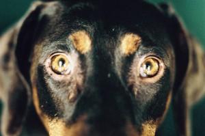 """""""Era brutto e malato"""" avrebbe detto alle forze dell'ordine per aver giustificato la brutale uccisione del suo cane"""