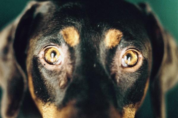 Il Cane Ingombra Lo Uccide A Mazzate Il Richiamo Della Foresta