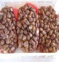 Le lumache, ancora vive, vengono trasportate ammassate nei sacchi, esposte e vendute come se fossero oggetti