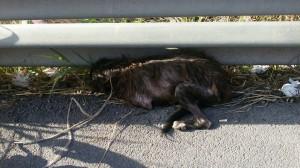 Rannicchiata sotto un guardrail, sfinita e terrorizzata, Serena aveva concluso la sua fuga