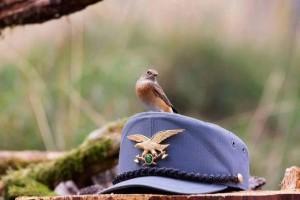 Un evento Facebook chiede che sia introdotto il divieto di praticare la caccia per chi sia arruolato nel Corpo Forestale dello Stato