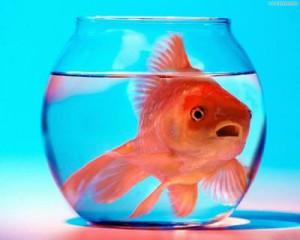 I pesci comunicano in modo silenzioso e, per noi, misterioso: questo non deve permetterci di ignorare che sono creature vive e sensibili