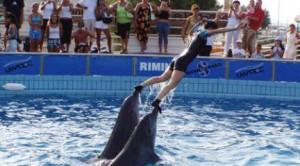 Sofferenza e costrizioni incompatibili con la natura dei delfini: i gestori del Delfinario di Rimini sono imputati di gravi maltrattamenti