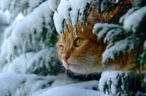 Senza riscaldamento né luce per la terza volta: la sicurezza dei gatti dell'oasi modello del Forlanini di Roma è di nuovo in pericolo