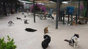 L'oasi felina del Forlanini è gestita dall'Associazione Azalea. Data la dismissione dell'ex complesso ospedaliero romano che la include, si chiedono alle istituzioni garanzie per il futuro di questo rifugio modello