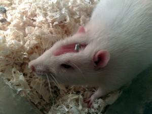Torturare e uccidere animali nei test di laboratorio rallenta la ricerca scientifica e mette a rischio la salute umana