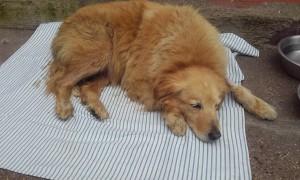 Sabato 23 gennaio ad Aversa la cagnolina Frittella, una meticcia libera accudita, è stata abusata sessualmente e seviziata. Benché in gravi condizioni è viva, affidata alle cure della Lndc
