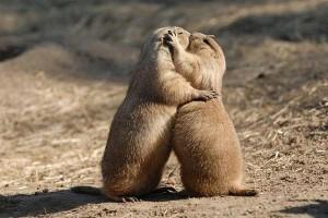 Si vogliono sterminare in deroga anche le marmotte e altre specie protette