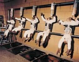 La scienza che nega di poter progredire senza test sugli animali nega la propria stessa vocazione