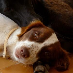 Penny è sparita a Pantellera il 9 ottobre scorso. Nello stesso periodo sull'Isola si sono volatilizzati almeno altri sei cani di proprietà. Le istituzioni locali tacciono. Chiunque abbia notizie di Penny può contattarci