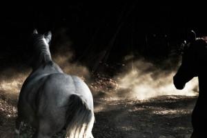 Il calendario IHP 2017 è firmato dalla fotografa Ottavia Poli. Acquistandolo sosterrai le attività della onlus in favore dei cavalli