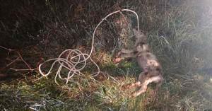 Era poco più che un cucciolo, è stato legato e trascinato con l'auto fino alla morte. E' accaduto alcuni mesi fa a Venosa (Potenza) e ora il Pm chiede l'archiviazione del caso.