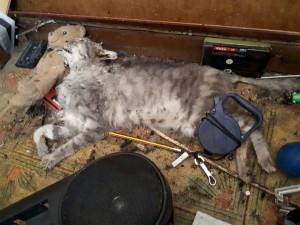 Durante lo sgombero sono stati rinvenuti diversi gatti morti. Uno era schiacciato sotto oggetti pesanti, un'altro, ormai mummificato, si trovava sotto il letto della padrona di casa.