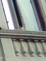 Il gattino che si intravede alla finestra è uno dei nuovi prigionieri della casa degli orrori, fotografato pochi giorni fa. Nelle settimane precedenti un video ha documentato la presenza di una gattina tricolore che piangeva dietro i vetri ma non se ne hanno più notizie.