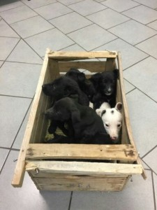 Sigillate in una cassetta per la frutta e abbandonate in mezzo ai rifiuti queste cucciole sono scampate a una fine orribile. Accolte nel Canile di Marzabotto sono in cerca di una casa.