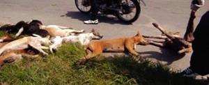 A decine, nei giorni scorsi a Sciacca, sono stati ritrovati cani vaganti morti per avvelenamento. Molte altre uccisioni crudeli sono state riscontrate in altri comuni siciliani.