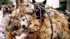 In alcuni paesi orientali, come la Cina, i cani sono destinati all'alimentazione umana e vengono allevati, trasportati e uccisi in condizioni atroci. Già dal 1993, come dimostra la Circolare a firma del ministro Garavaglia, la massiccia movimentazione di randagi destava allarme. Fra le ipotesi, mai verificate, un traffico destinato all'alimentazione umana e animale, alla vivisezione, al commercio delle pelli, in aggiunta a zoerastia, sadismi, lotte clandestine, trasporto della droga.