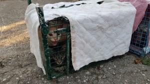 Terrorizzati, magrissimi, i pochi gatti superstiti alla casa degli orrori di Palestrina vengono salvati e portati via dalla catturatrice Elena Chertizza e da volontari di Animalisti Italiani onlus