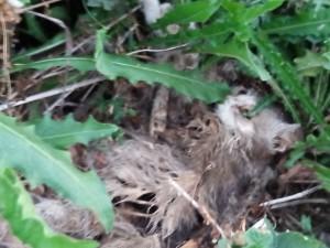 Autorità avvisate da cinque mesi, sopralluogo di carabinieri forestali e asl e nessun provvedimento: questa bellissima gatta, forse, oggi sarebbe viva.