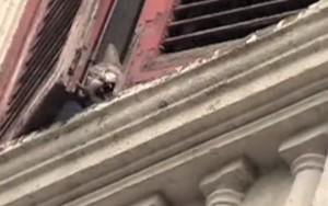 Negli anni alcuni gatti hanno cercato scampo alla casa degli orrori  di Romalanciandosi dalla finestra.