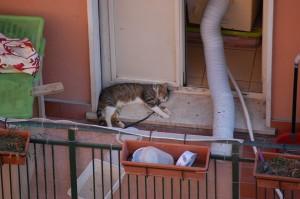 Leo detenuto a catena e salvato dalle guardie zoofile dell'Oipa di Roma per morire a causa di una gastroenterite contratta al canile della Muratella mentre era affidato in custodia giudiziaria a Roma Capitale.