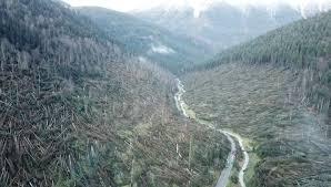 Milioni di alberi caduti in Veneto a causa dell'uragano di fine ottobre, migliaia e migliaia di animali morti, in fuga o in gravissima difficoltà. Eppure la stagione di caccia non è stata interrotta. Se ne chiede la sospensione immediata.