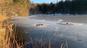 Caduti in un lago gelato, imprigionati nel ghiaccio, due cani a Irvington (USA) sono stati salvati da Tim e Kira, un uomo e un cane abili e coraggiosi.