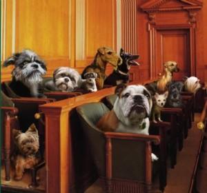 Troppo spesso la magistratura sottovaluta crimini e reati a danno degli animali e ne sono la prova stupefacenti richieste di archiviazione. Processi e sentenze al passo con i tempi sono ancora abbastanza rari.