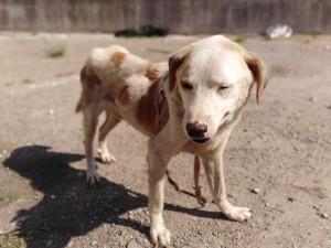 Ennesimo caso di accumulatrice seriale di animali, questa volta cani, vicino Salerno. A occuparsi dei superstiti i volontari di Lndc-Animal Protection.