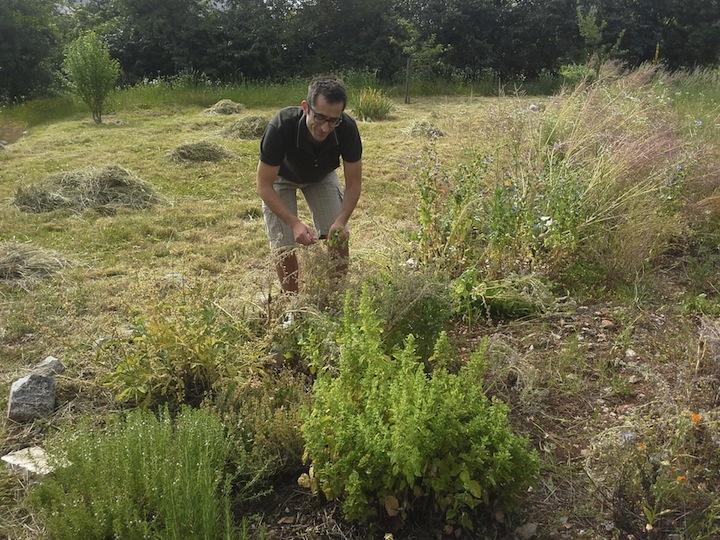 Enrico Milic a Pliskovica mentre raccoglie le erbe dal suo giardino