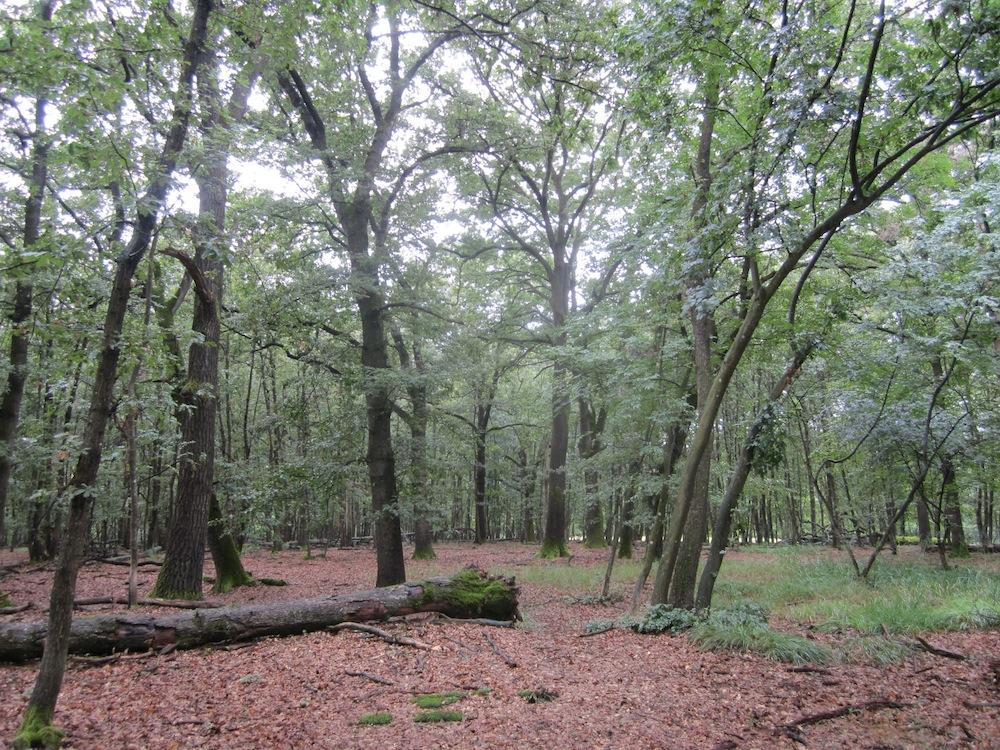 bosco di Carrega, a 15 km da Parma