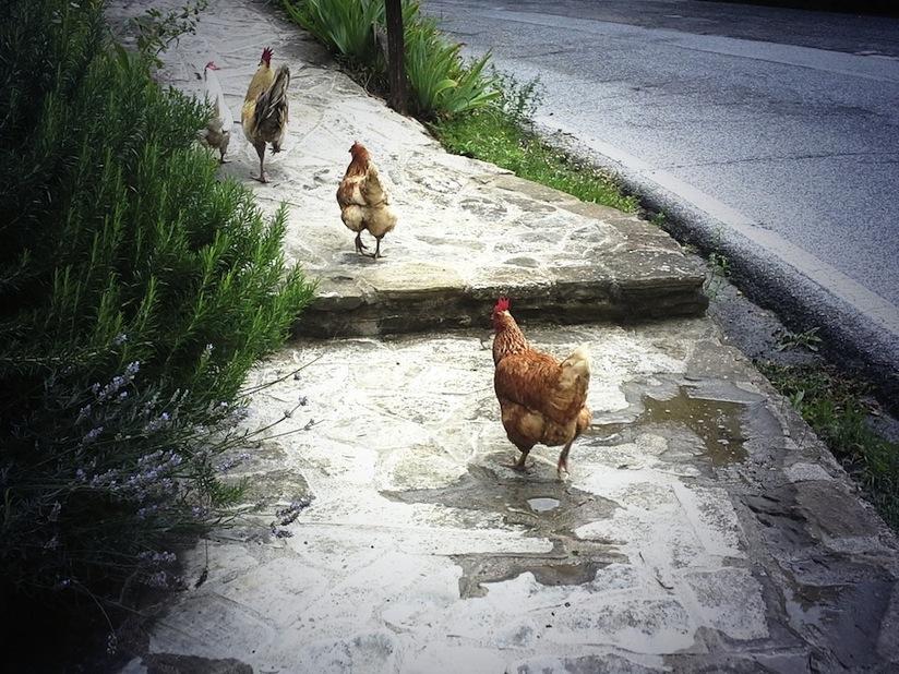 i galli del passo