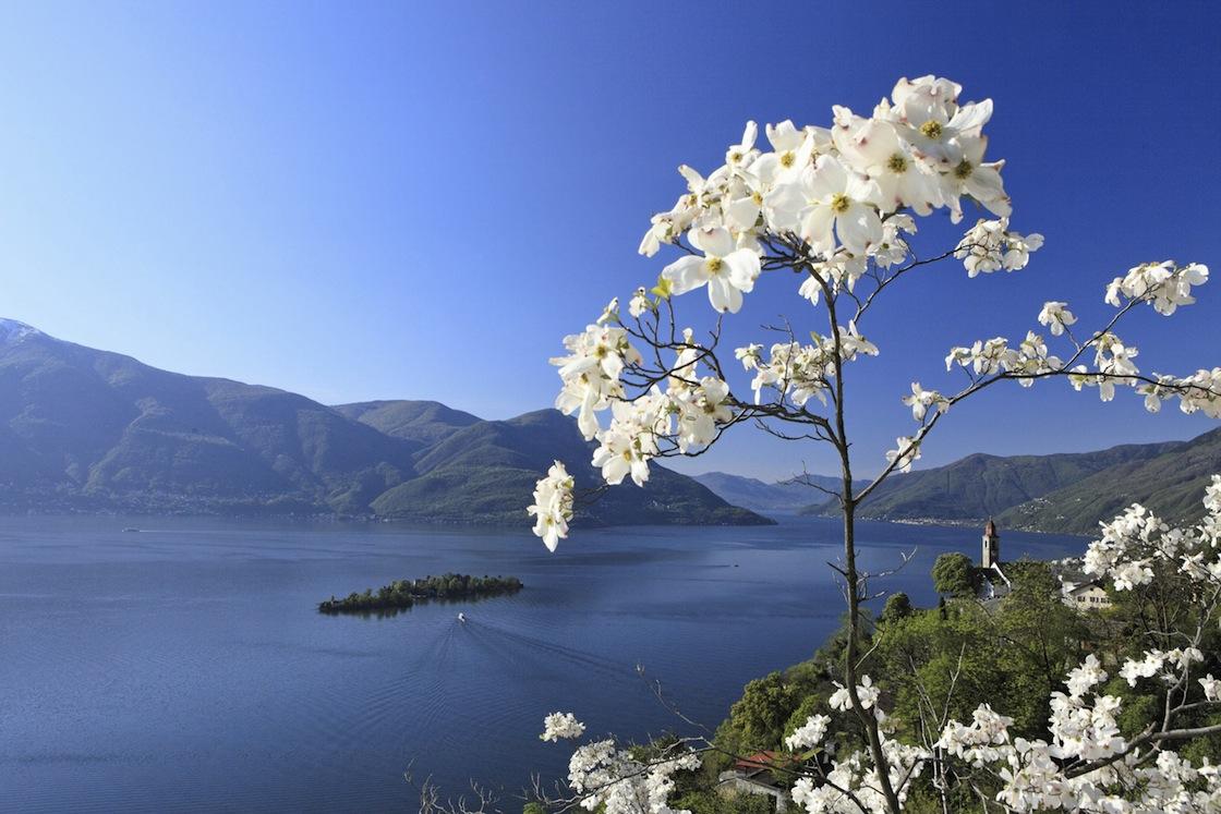 Ticino: Lago Maggiore